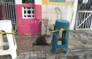 Bomberos exterminan enjambre de abejas
